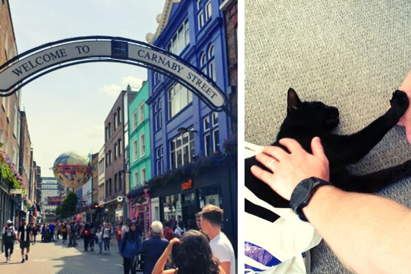 cat and carnaby